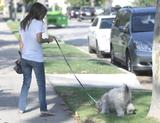 Actress Rachel Bilson in jeans walks her pooch in LA
